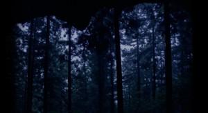 ヒグラシの森1_s