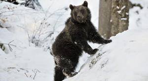 bear-s